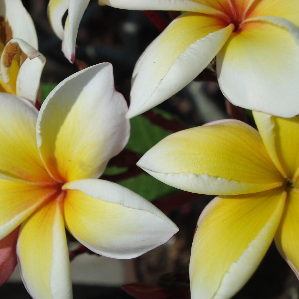 Biooo Relaxační a uvolňující masáž zad oleji Pure Fiji 50 min