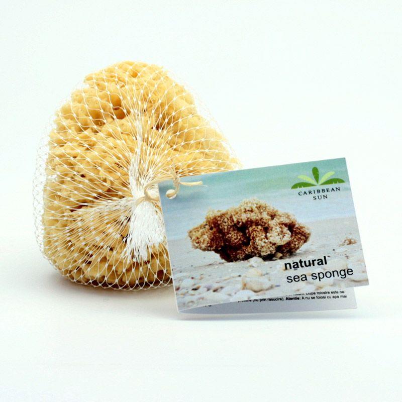 Caribbean Sun Mořská houba Karibská, SLCG 376 1 ks, 14-15 cm