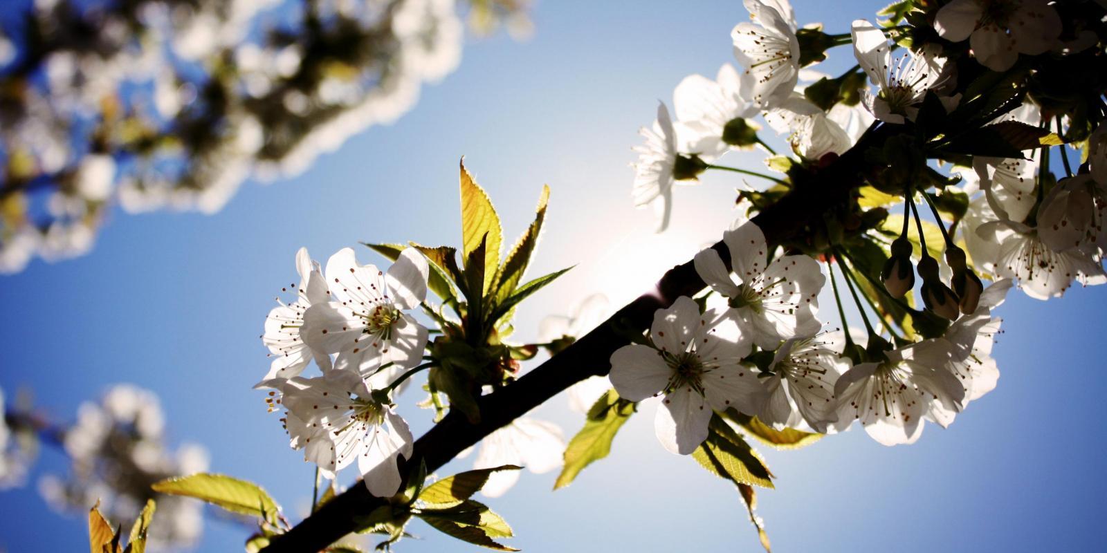 Jaro v kosmetice