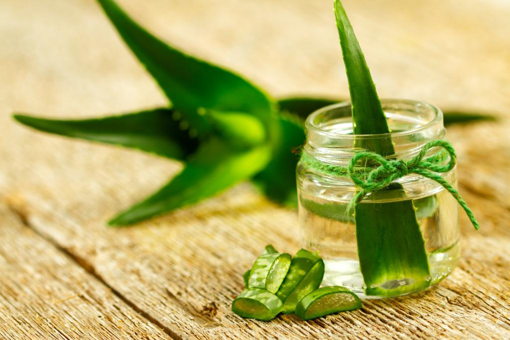 Aloe vera pro výživu