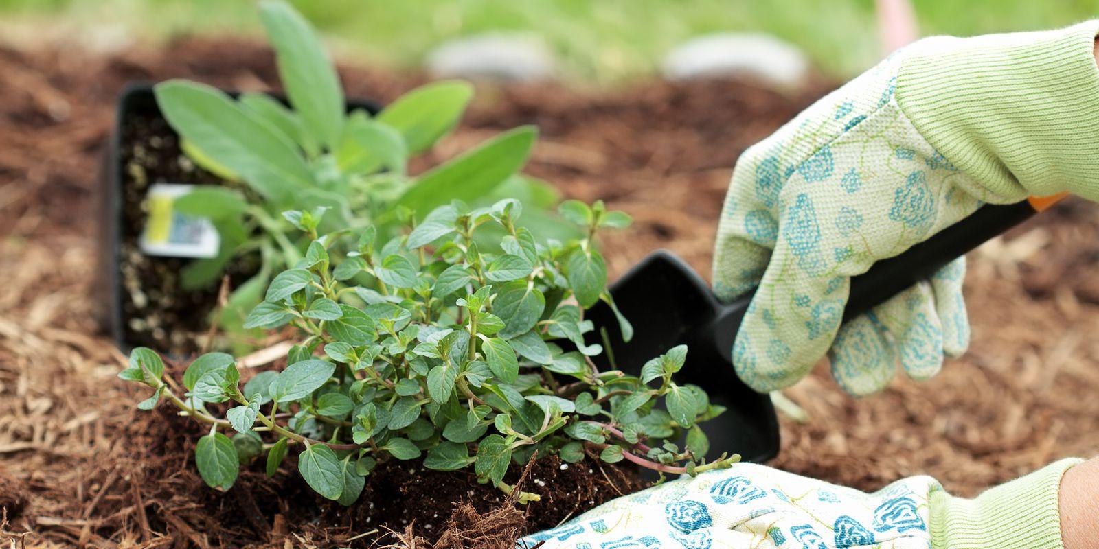5 exotických bylin, které si můžete sami vypěstovat na balkoně