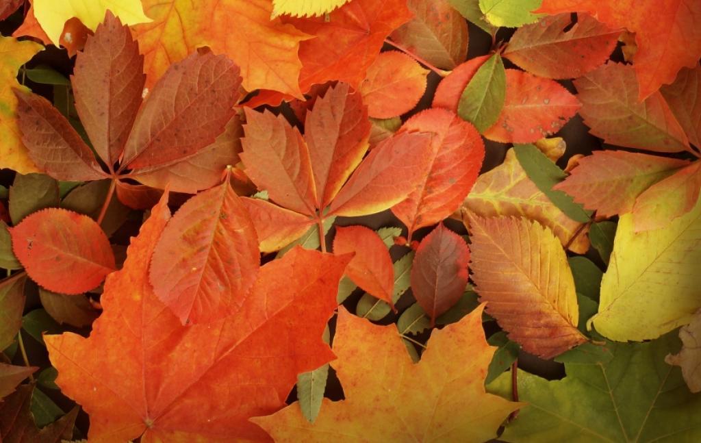 5 věcí, které si tento podzim přidejte