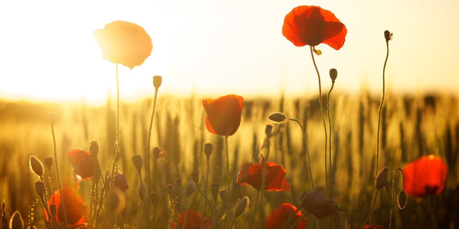 Aromaterapie a pět elementů – Pozdní léto