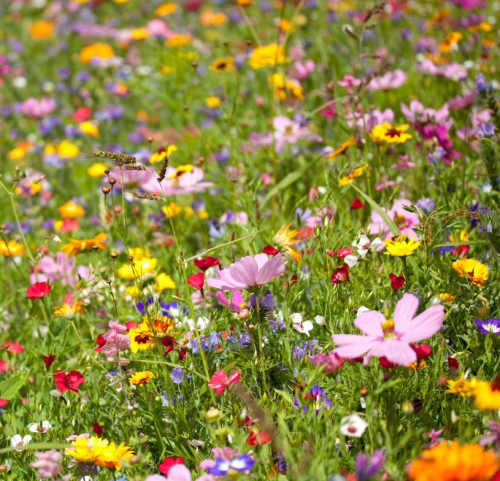 Květové esence