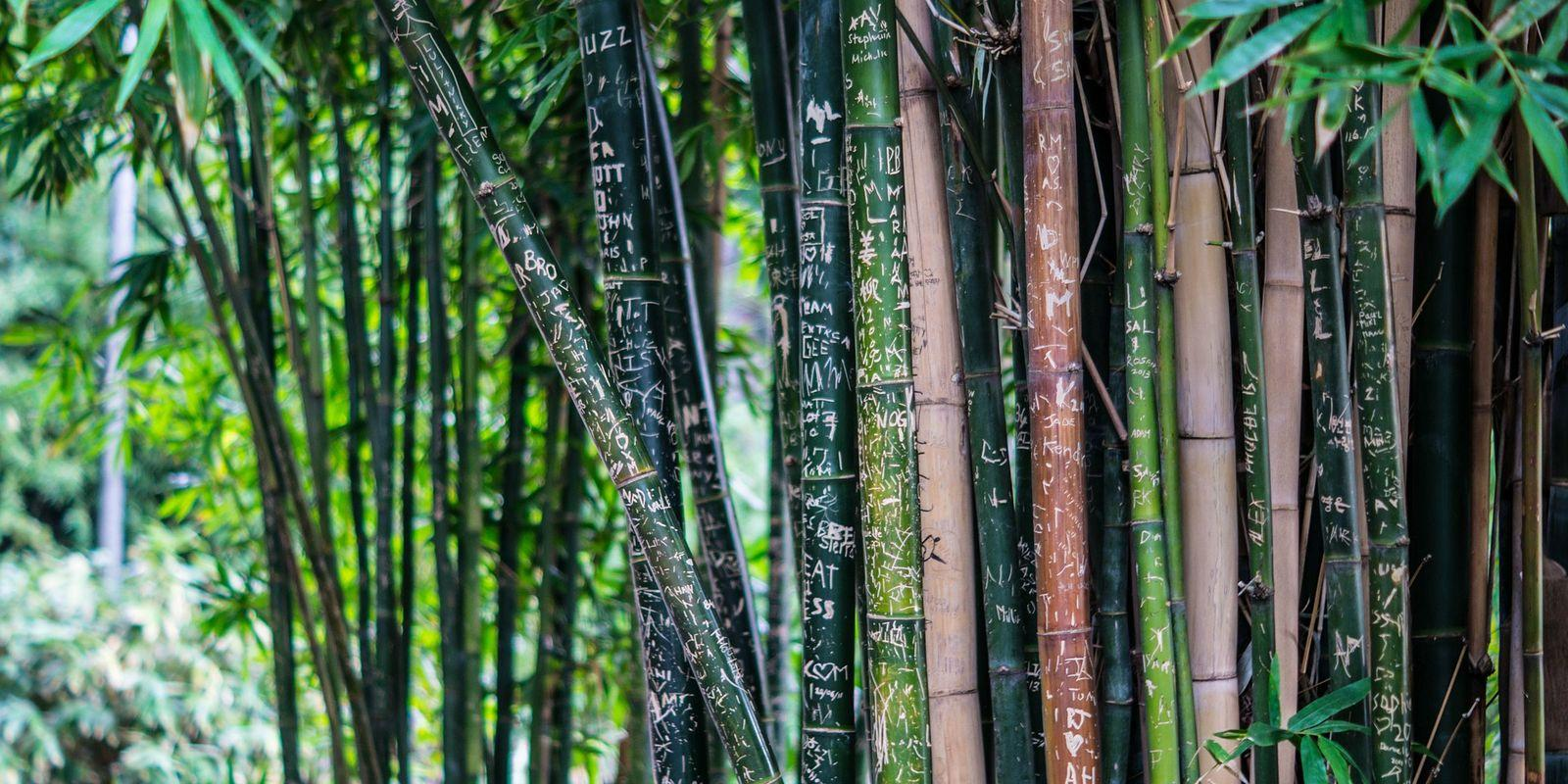 Bambus - ekologická surovina budoucnosti