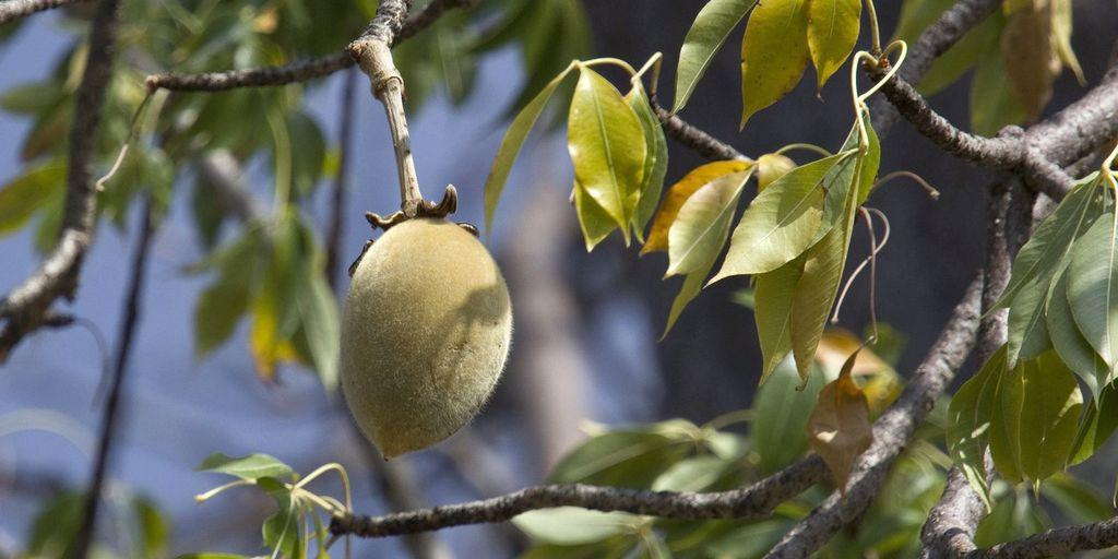 Baobab – strom života