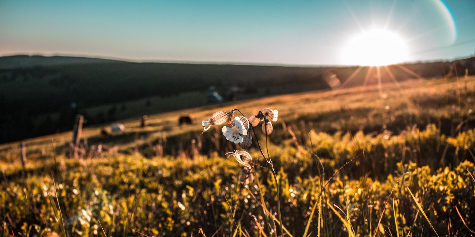 Biodynamické zemědělství aneb Návrat ke kořenům