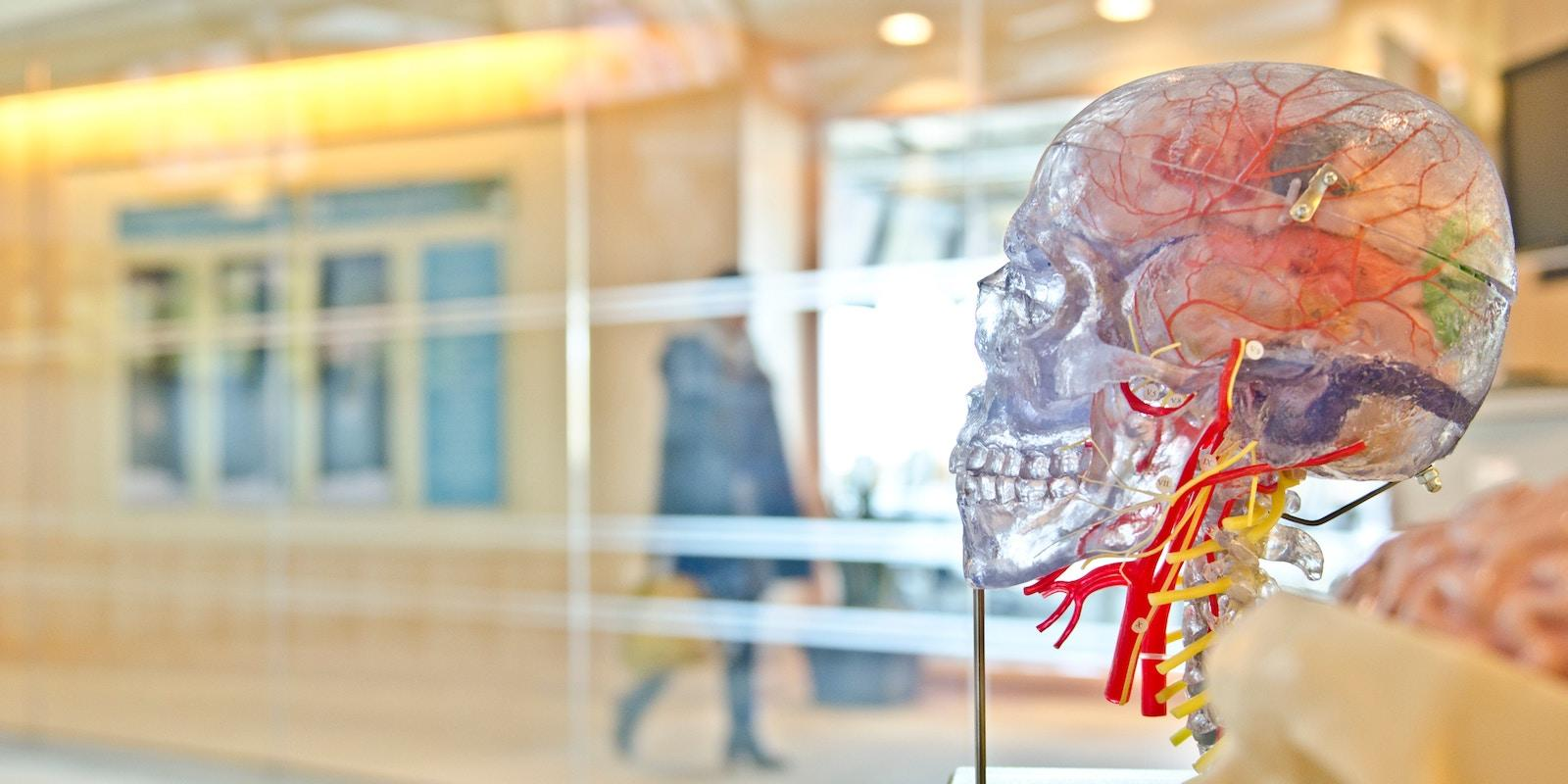 Brainfood - výživa pro mozek