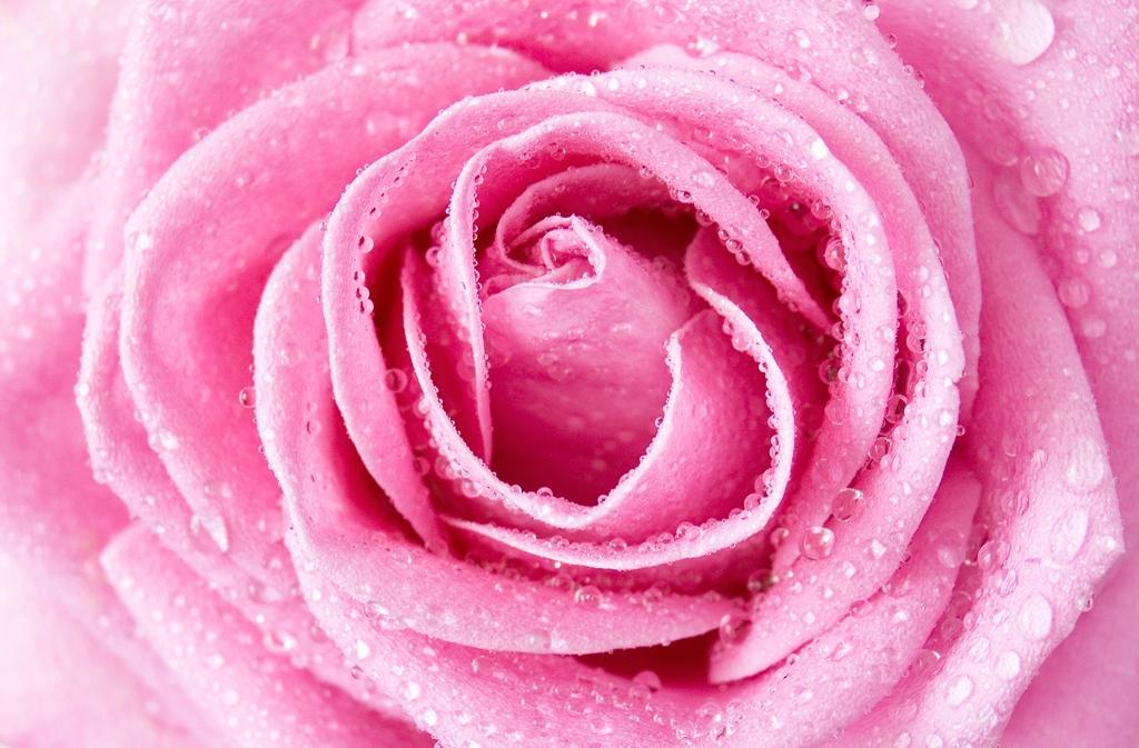 Vyspěte se do růžova!