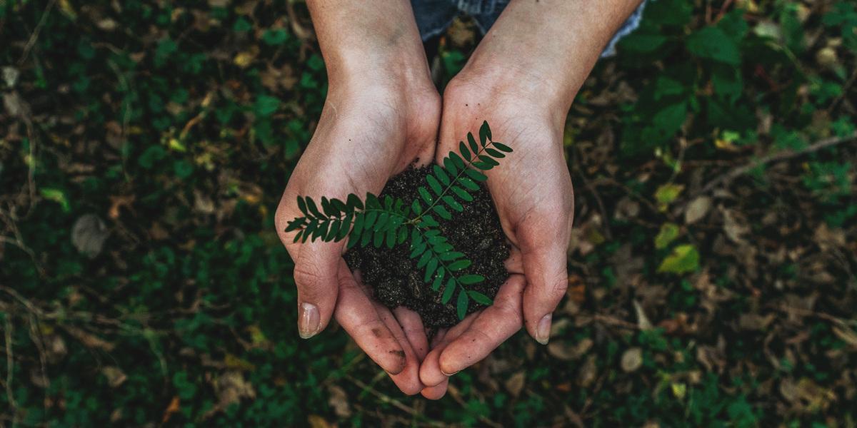 země, hlína, planeta, zelen, rostlina v dlani