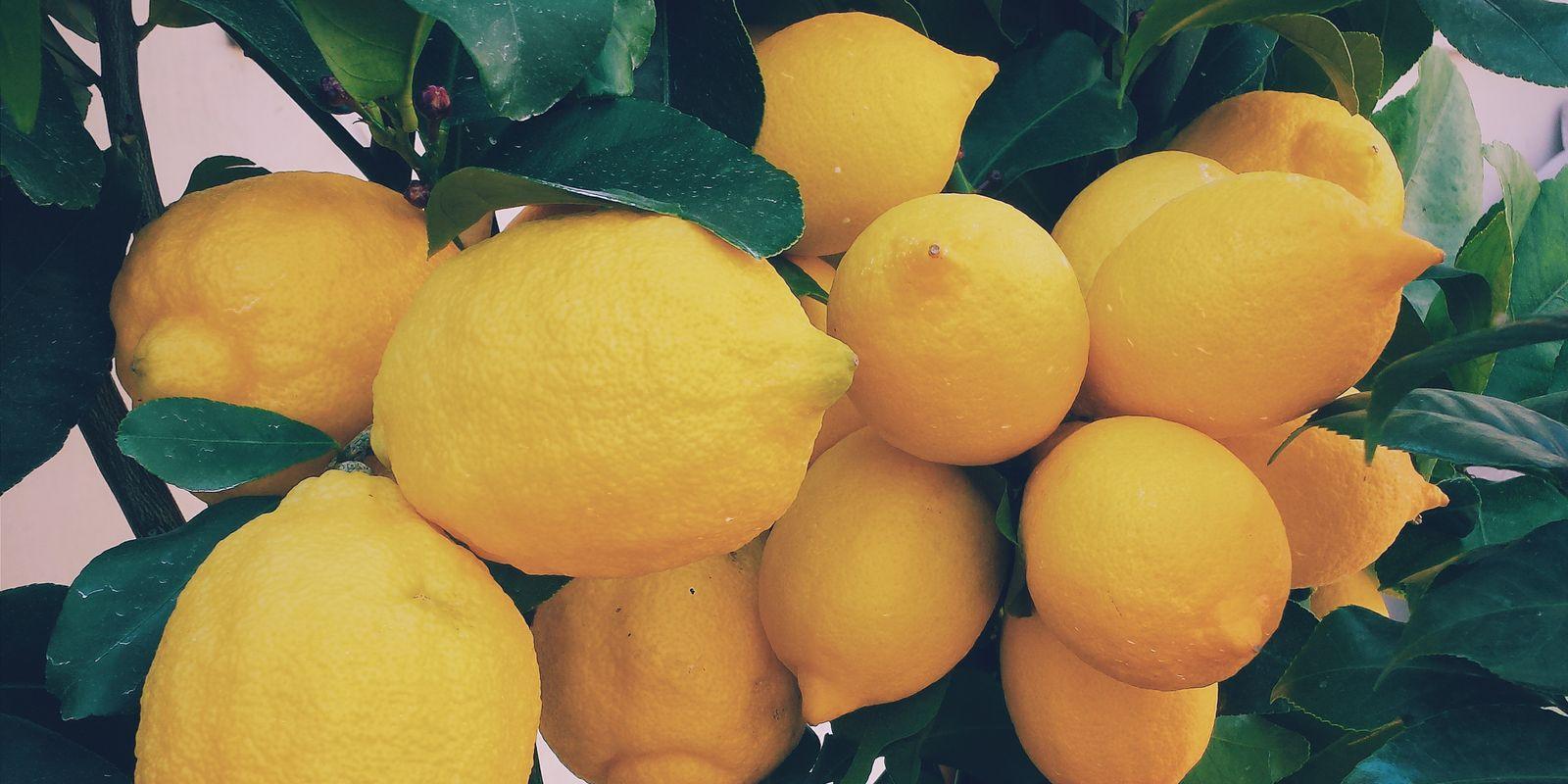 Obecné informace a historie o citronu