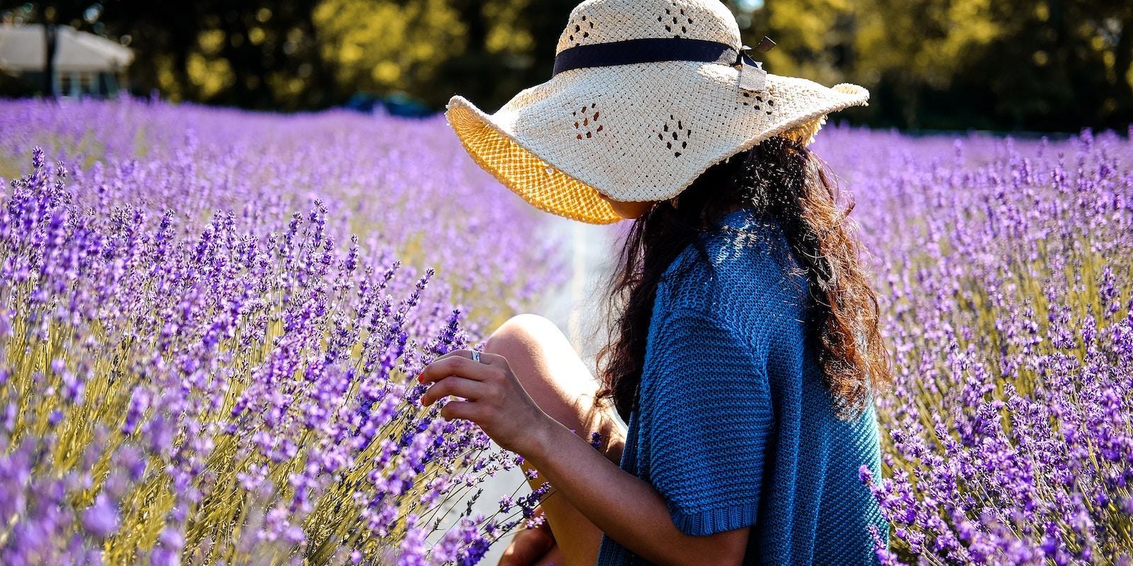 Levandule v kosmetice, aromaterapii a léčitelství