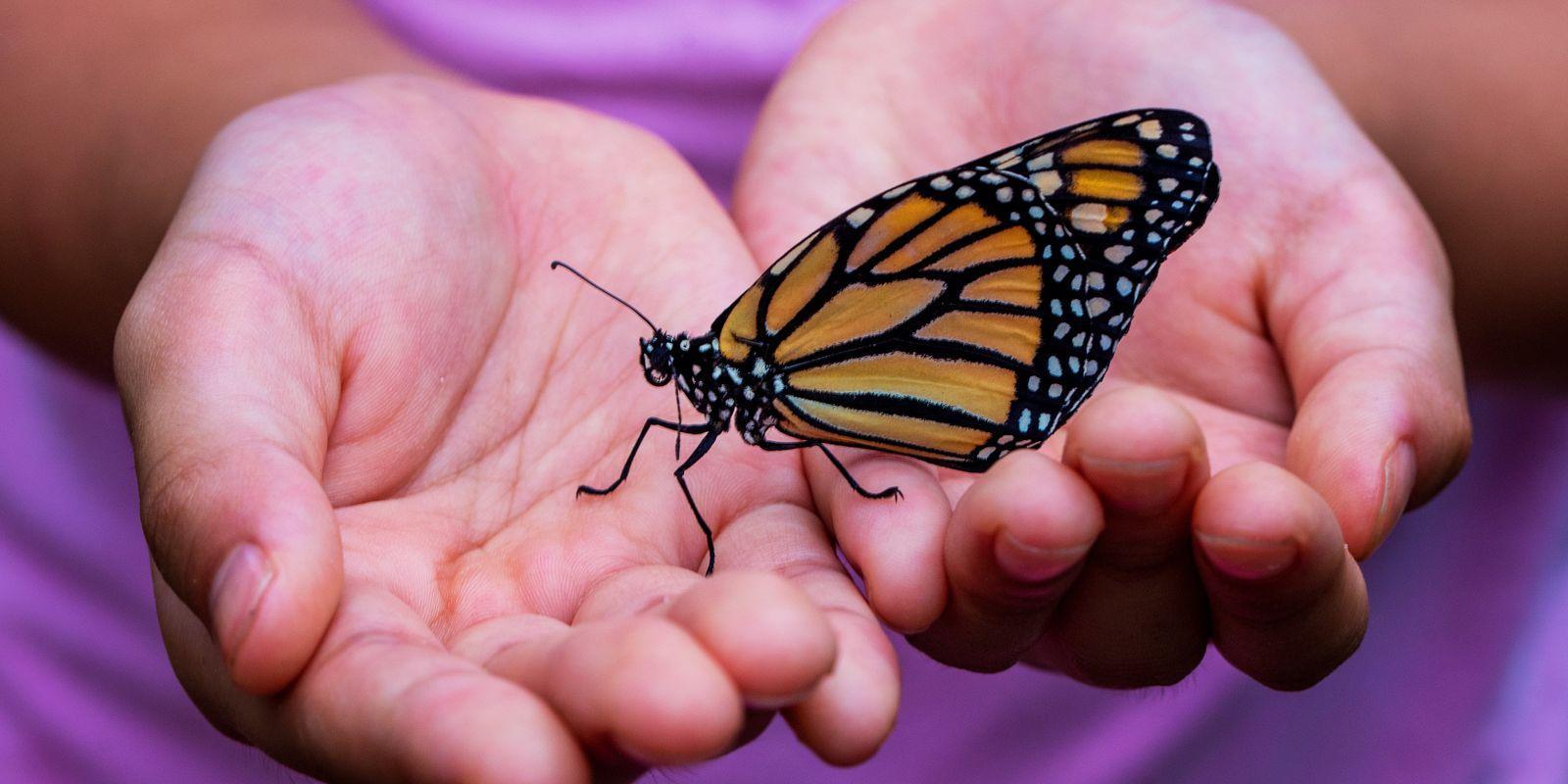 Farfalla - krása na křídlech motýlů