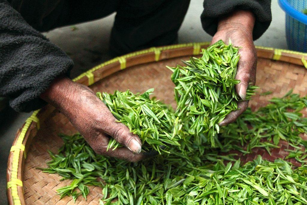 Filantropické Numi čaje