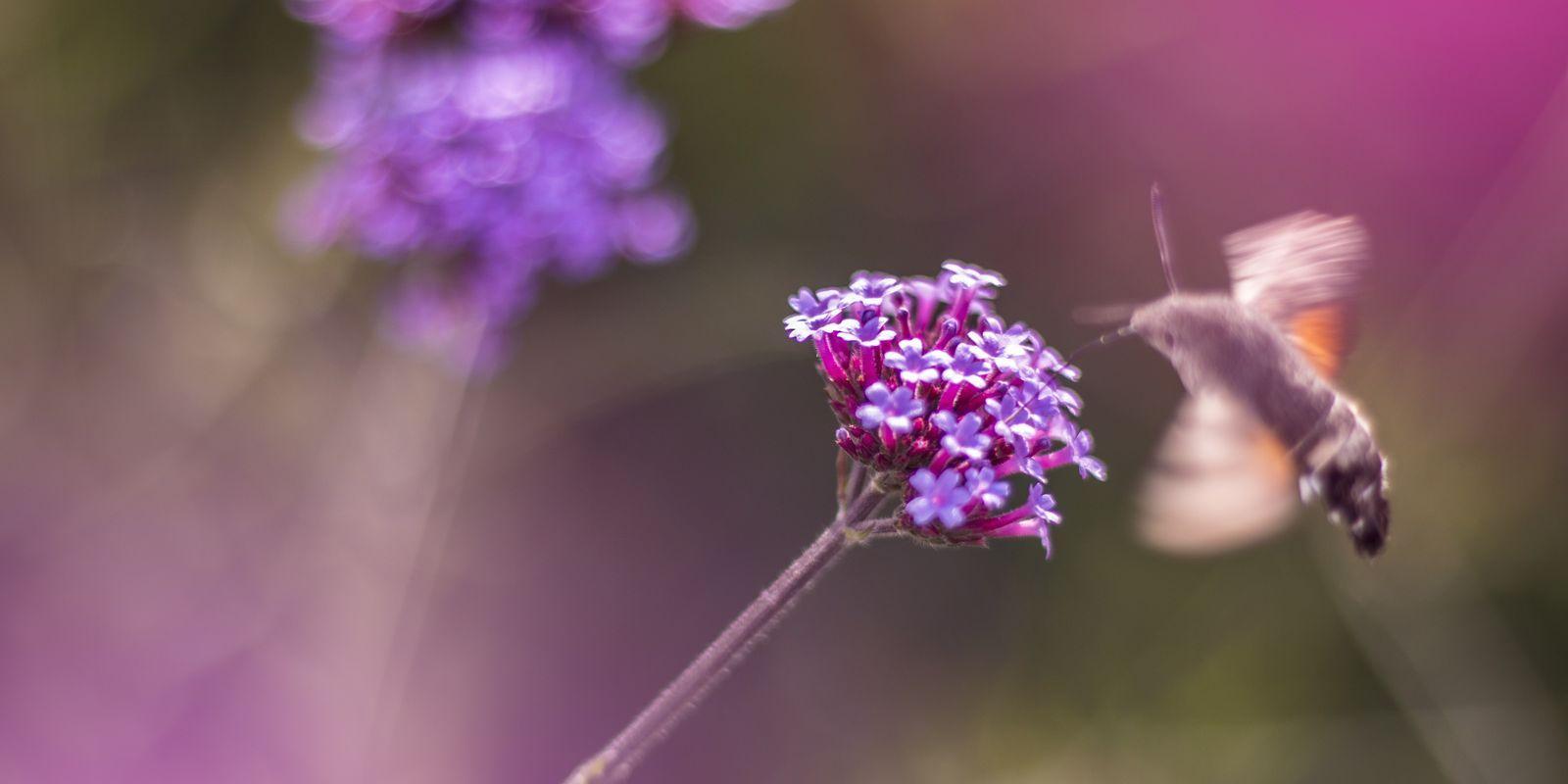 Herbalismus a dokonalé fungování lidského těla