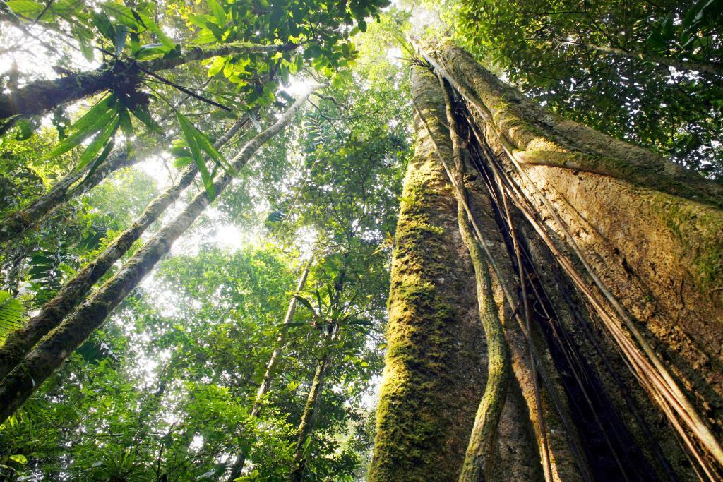 Guarana: povzbuzující superpotravina