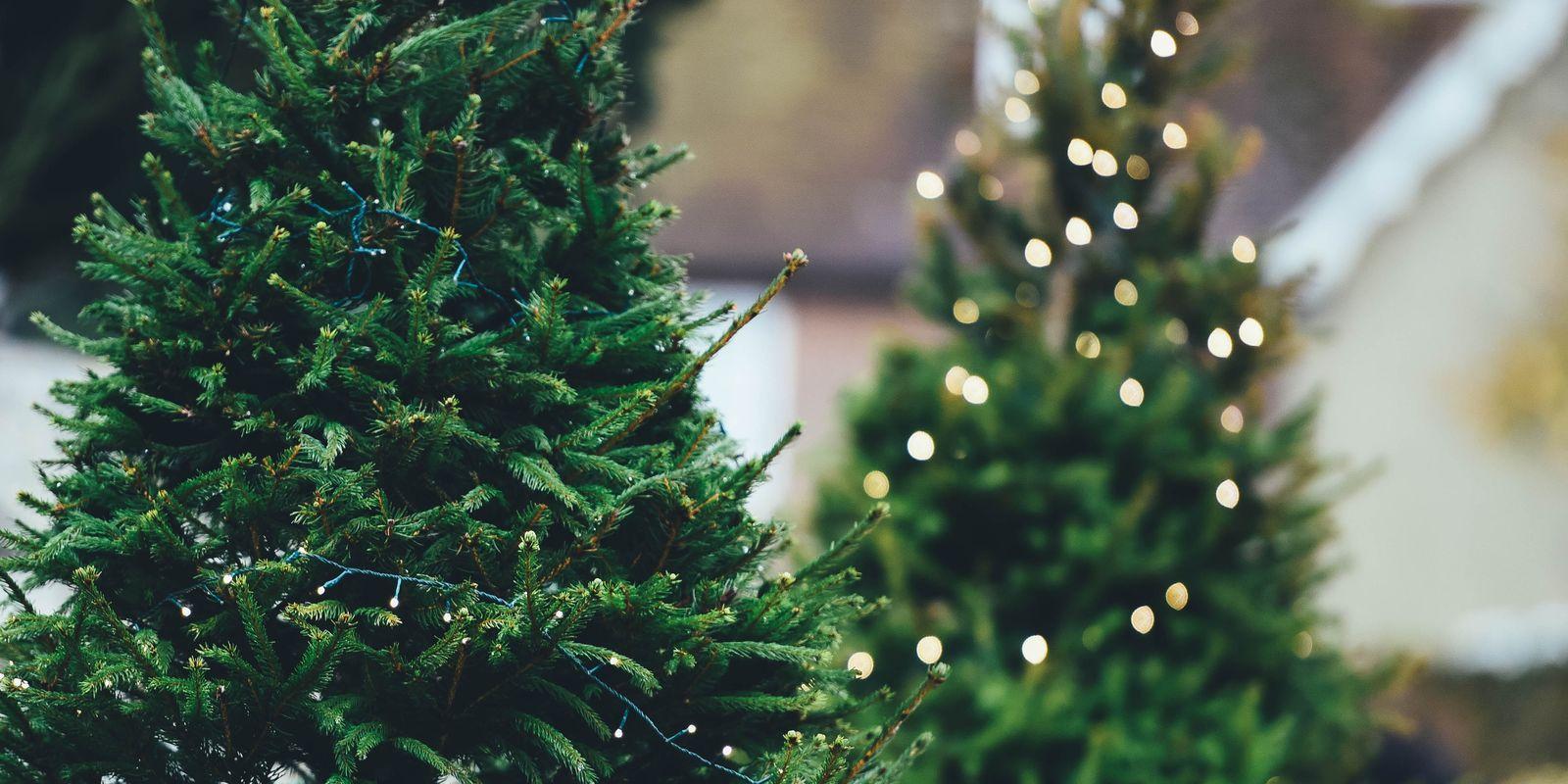 Jak na eko vánoční stromek