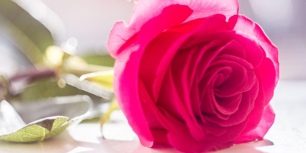 Jak voní růže?