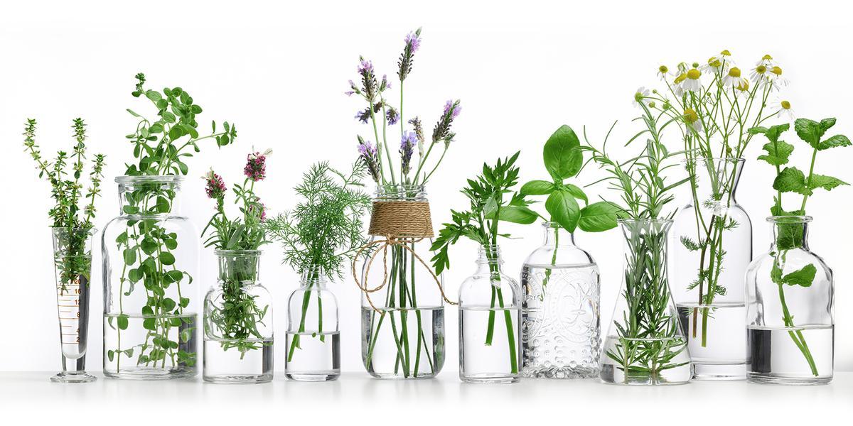 Bylinky, jarní bylinky, heřmánek, bazalka, rozmarýn
