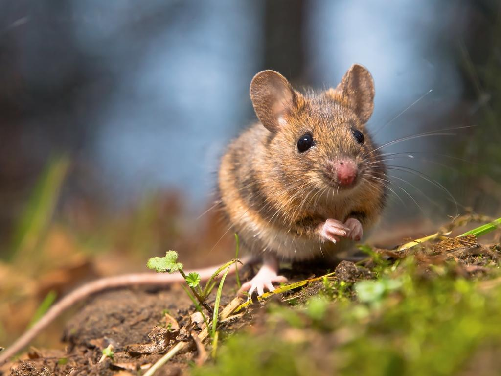 Kosmetika netestovaná na zvířatech - průvodce pro začátečníky