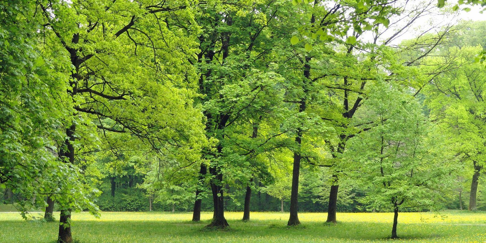 Léčivá síla stromů