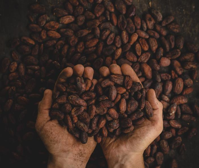 Kakaové body již pražené používané k výrobě čokolády Lyra