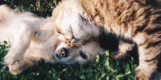 Bezpečnostní rady pro použití éterických olejů na zvířatech