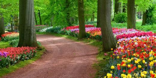 Dívej, rozkvetla nám zahrada