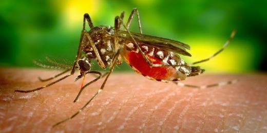 DIY repelenty proti otravnému hmyzu