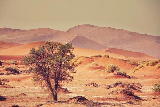 Přírodní kosmetika z pouště Faran
