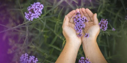 Fytoterapie aneb Terapie prostřednictvím zázraků z přírody