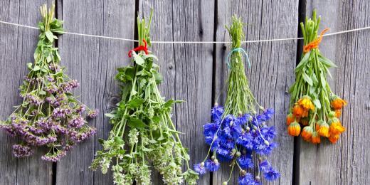 Herba medica - to nejlepší ze světa léčivých bylin