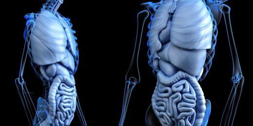 Jak pečovat o střevní mikroflóru
