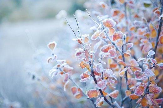 Léčivá echinacea nejen do mrazivého počasí