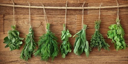 Léčivé rostliny a medicína z přírody