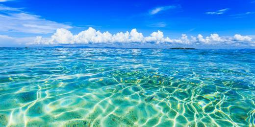 mořské a sladkovodní řasy v kosmetice