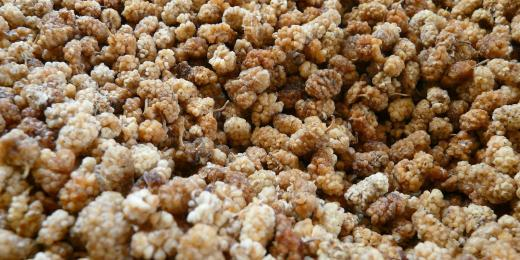 Moruše – superpotravina ze starověké Číny