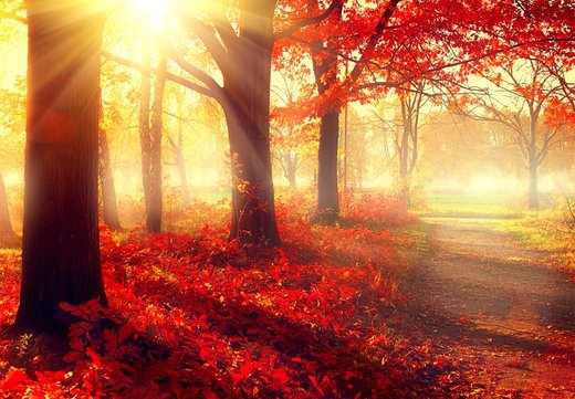 Na co se soustředit v období podzimu?
