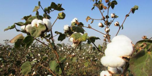 Natur Amarel – bio bavlna z Francie