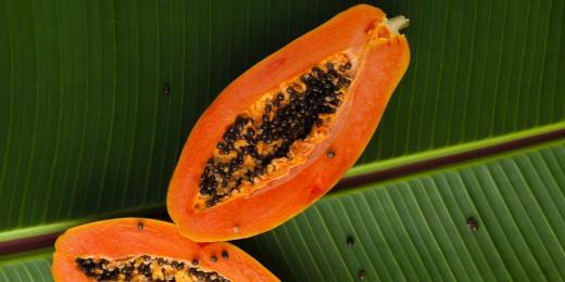 Papája - nenápadná superpotravina