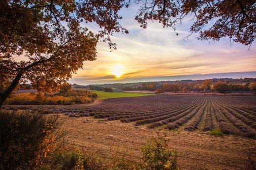 Pesticidy v životním prostředí