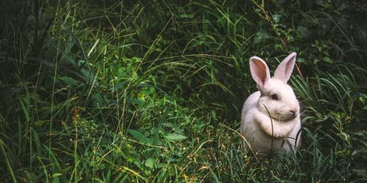 Vše o certifikátu Leaping Bunny