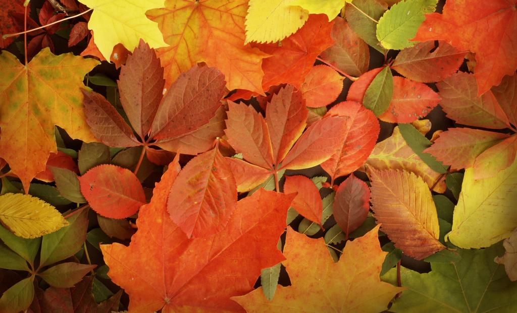 Podzim z pohledu TČM