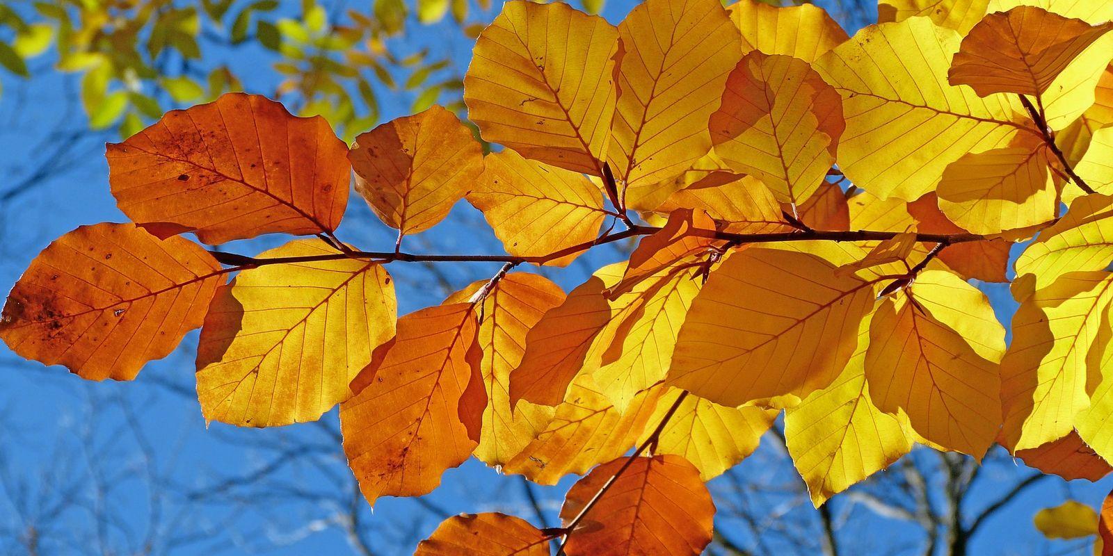 Nalakujte si nehty v podzimním stylu
