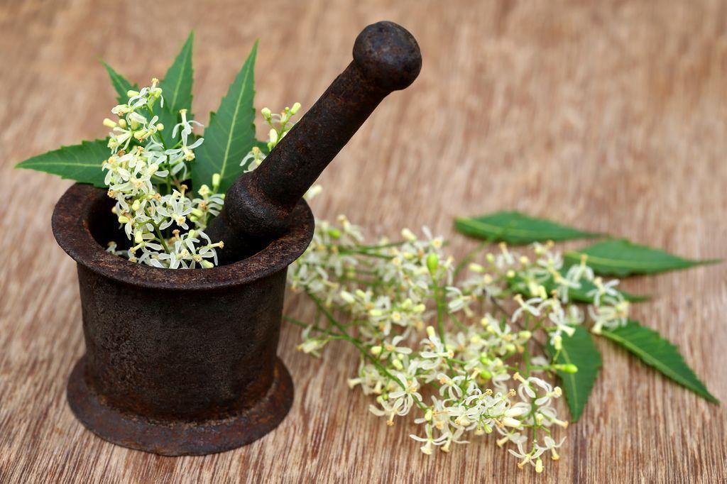 Sušený neem pro každý typ pleti