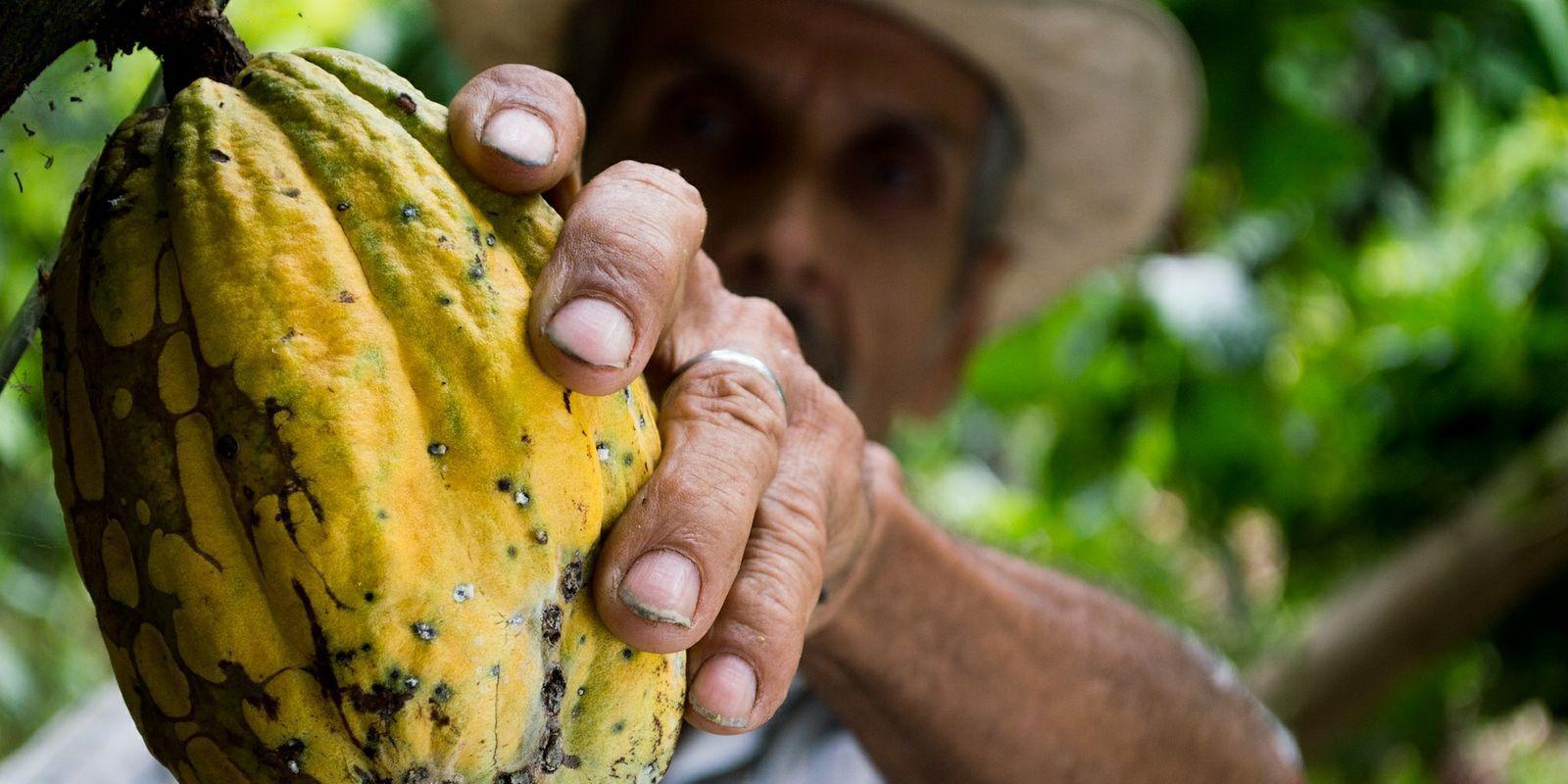 Nepražené kakaové boby – božská superpotravina