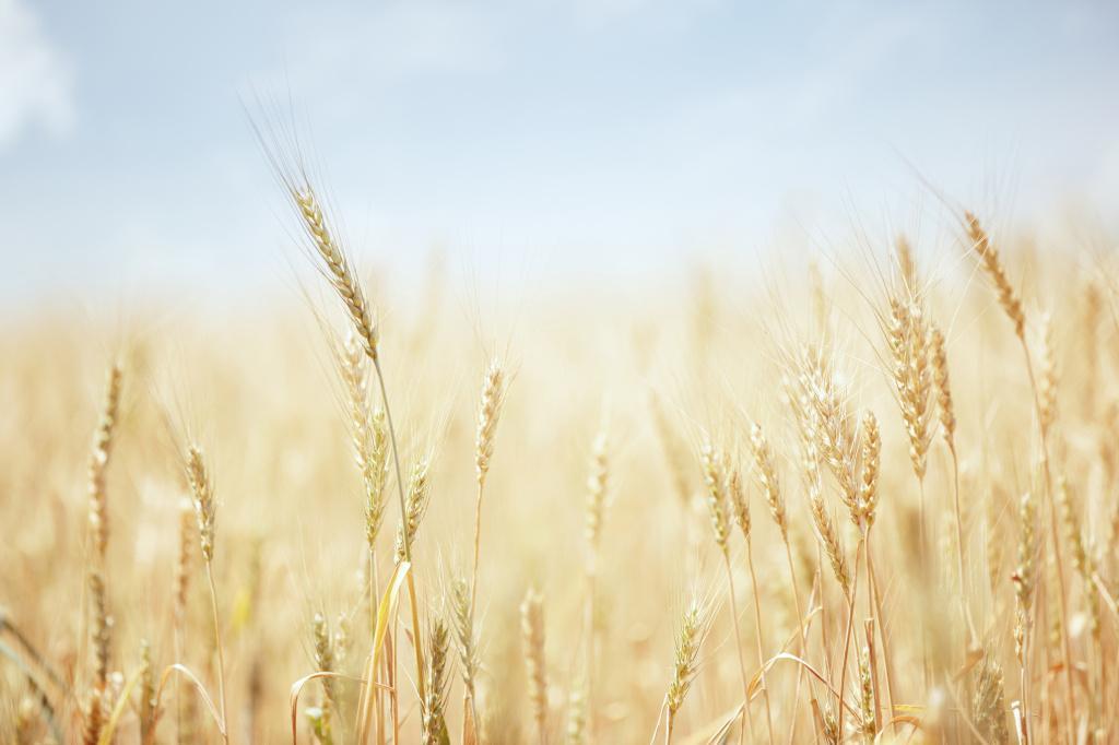 Pesticidy, jak je známe