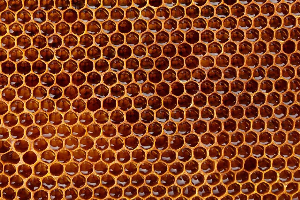 Propolis - včelí pomoc na nemoci od A do Z