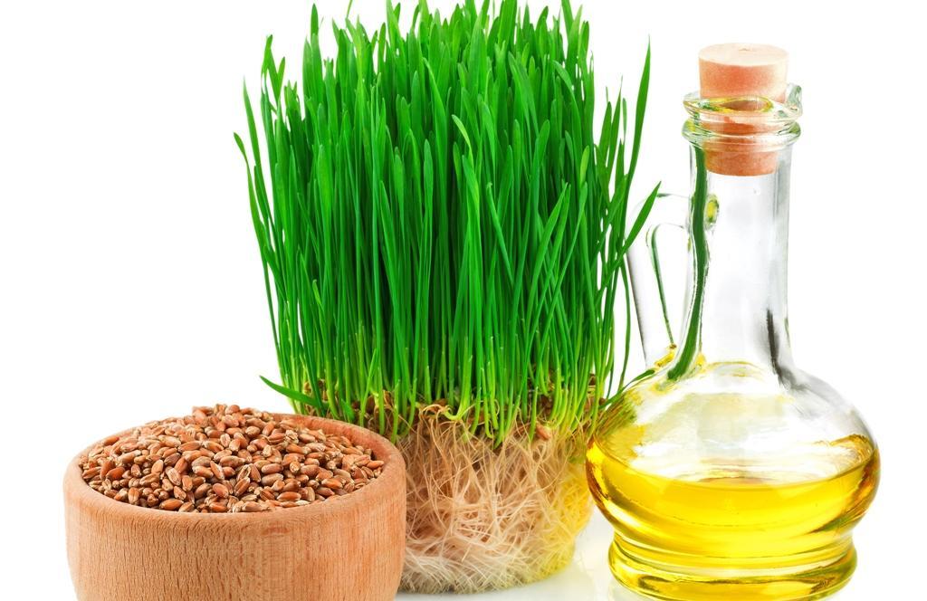 Pšenice a pšeničný olej