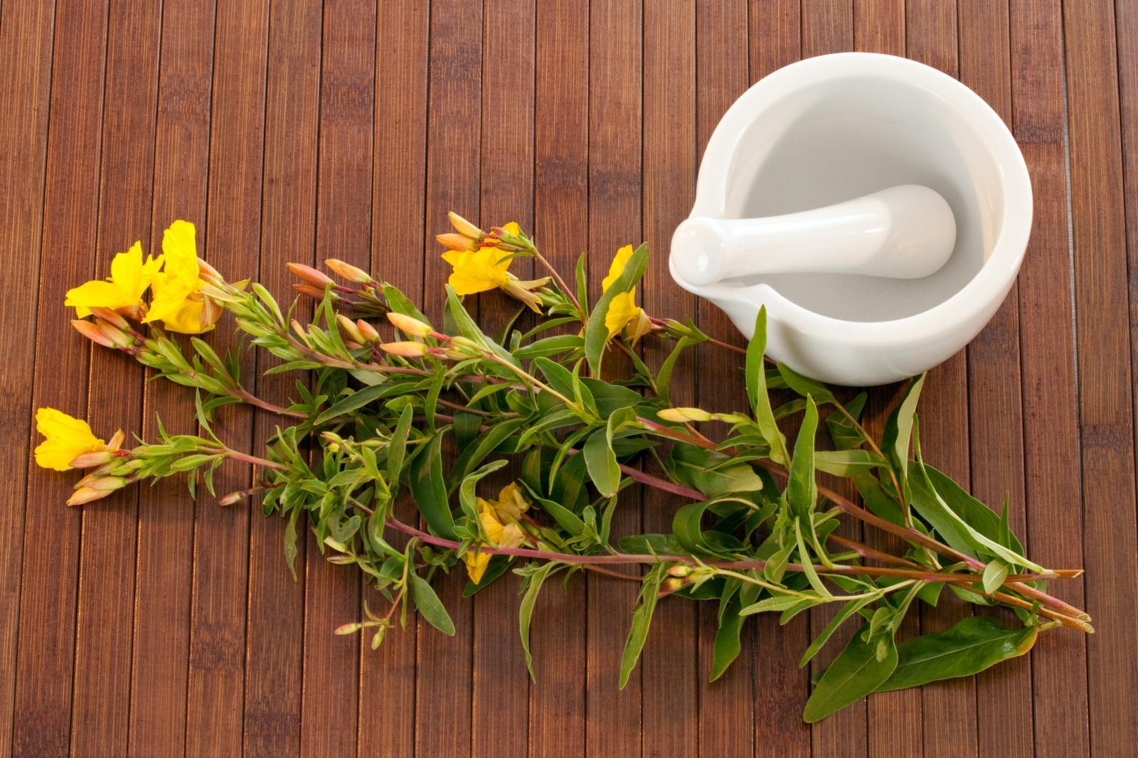 Pupalkový olej se lisuje ze semínek této krásné rostliny.